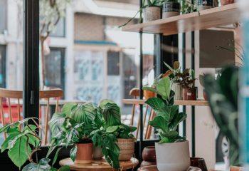 Cotebrook Village Hall Plant Sale